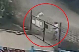 La Guardia Civil busca a este desalmado por clavar a su perro en una valla