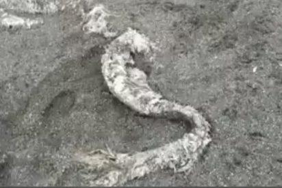 Este misterioso 'monstruo peludo' es arrojado por el mar en el Extremo Oriente de Rusia