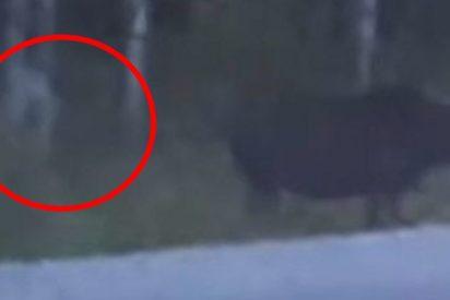 Graban en un bosque a esta criatura misteriosa sin rostro parecida a Gollum