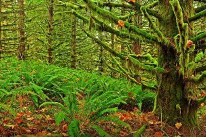 ¿Sabías que las plagas forestales emiten el CO2 equivalente a 11 millones de coches solo en Estados Unidos?