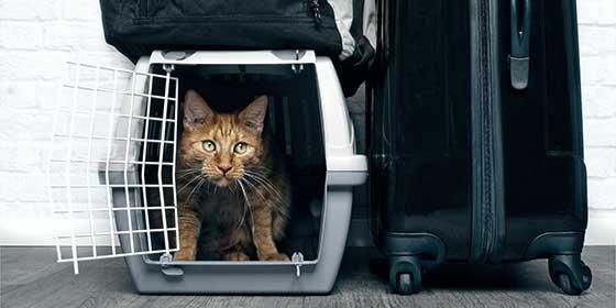 ¿Quieres viajar en avión con tu gato pero no sabes cómo?