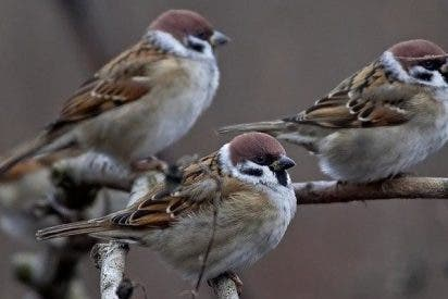¿Sabías que las aves insulares evolucionaron hacia cerebros más grandes?