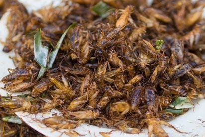 ¿Sabes por qué comer grillos puede ser beneficioso?