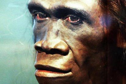 ¿Sabías que la pereza contribuyó a la extinción de Homo erectus?