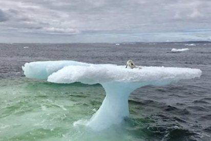 Algunos pescadores creyeron ver una foca sobre este iceberg, hasta que miraron de cerca