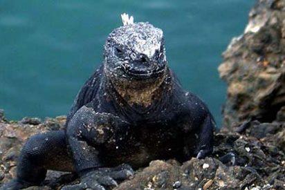 Galápagos, un destino para disfrutar la naturaleza