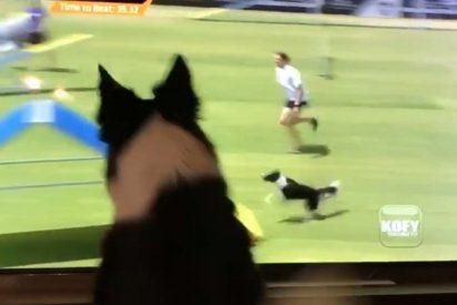 ¿Todavía nos has visto la reacción de esta perra que se ve a sí misma ganando un concurso?