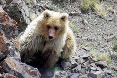 Una bestia casi mitológica que se creía extinta reaparece seis décadas después