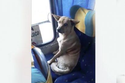 """El gesto de este conductor hacia un perro callejero que subió a su autobús conmueve las redes"""""""