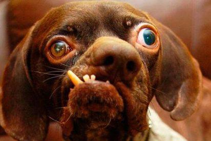 Ladrón entra a robar a una vivienda pero se olvidó a su perro dentro