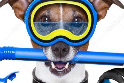 Este perro buceador enamora la Red con sus peripecias subacuáticas