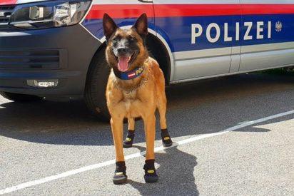 Ponen zapatos a los perros policiales en Viena y Zúrich por la brutal ola de calor
