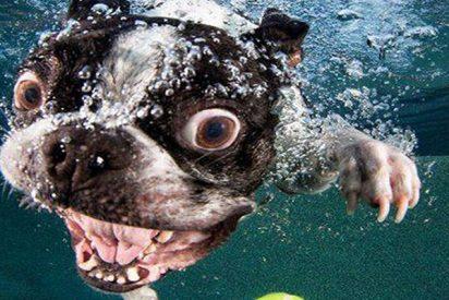 """Estos perros son tan """"tontos"""" que es imposible no reírse"""
