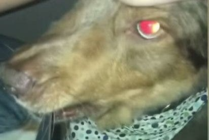 Se queda a dormir en casa de su hermano y el perro la 'saluda' con un cuchillo en la boca