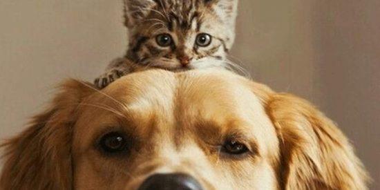 Así es de verdad la equivalencia con los humanos de los años de perros y gatos
