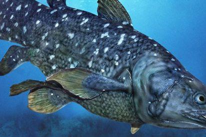 Esta especie marina que sobrevivió a los dinosaurios muere por tragar basura de plástico