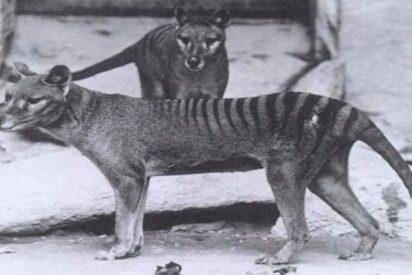 Así es el primer atlas de mamíferos vivos y extinguidos por los humanos