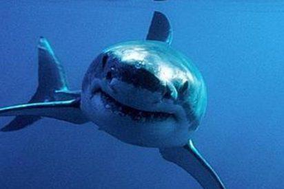 Cierran esta playa española por la 'visita' de un tiburón moribundo