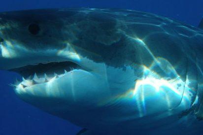 Este niño sale a pescar con su padre y se encuentra frente a frente con un tiburón blanco