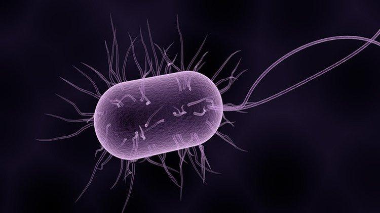 ¿Sabías que las bacterias no han cambiado de 'contraseña' en 2.700 millones de años?