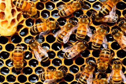 Encuentran una colonia de 60.000 abejas en el tejado de un hospital británico