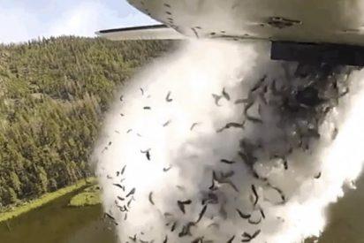 Así arrojan miles de peces desde un avión para repoblar los lagos en Utah