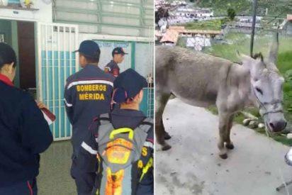 20 años de prisión: La condena para los bomberos que compararon a Maduro con un burro