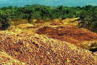 Tiró toneladas de cáscara de naranja en un campo durante 16 años, y este es el resultado