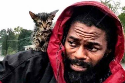 Vídeo: 'Sobreviviente', el gatito con suerte que burló al huracán Florence y a la muerte