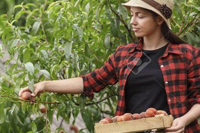 ¿Sabías que la agricultura de alto rendimiento congenia mejor con el medio ambiente?