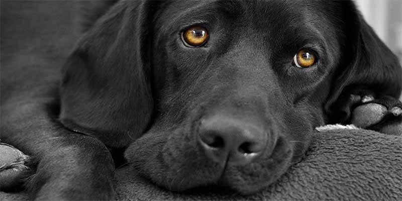 Este perro salva a un hombre de pasar toda su vida en prisión por 'matón'