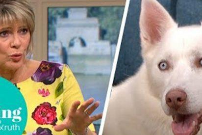 Afirma en televisión que su perro es vegetariano y el can la deja en ridículo ante las cámaras