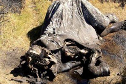 La mayor matanza de elefantes de la historia de África
