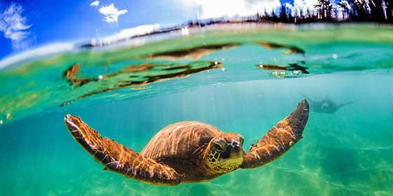 Las tortugas vuelven, tras 20 años, a una playa india que han limpiado, demostrando que podemos marcar la diferencia