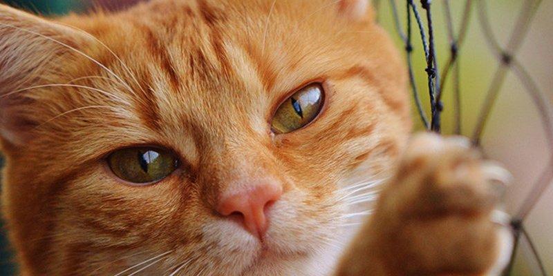 Un hombre contrae una grave infección tras ser arañado por su gato