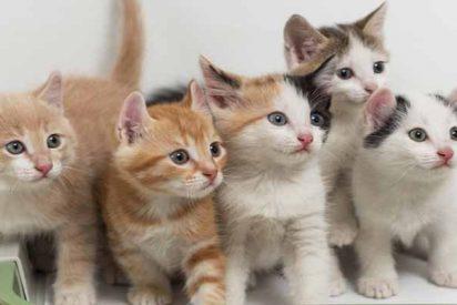 Los 21 beneficios de tener gato... según los amantes de los gatos