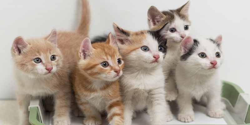 Japón: el macabro misterio de la muerte de decenas de felinos en la 'isla de los gatos'