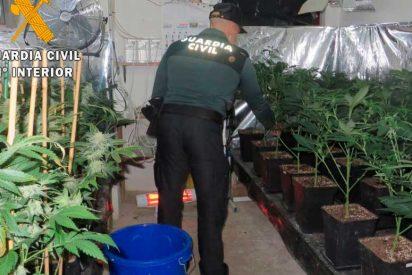 Lllama a la Guardia Civil tras intentar robarle su plantación de marihuana en Cambados