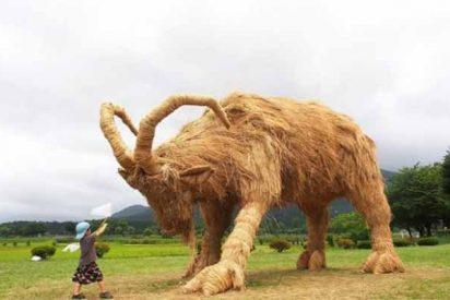 Japón: los nipones festejan la cosecha del arroz con grandes esculturas de paja