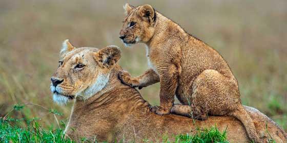 Masai Mara: Uno de los mejores destinos de vida silvestre en el mundo
