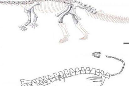 Nueva especie de dinosaurio con patas de lagarto descubierto en China