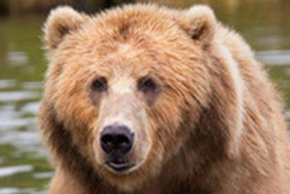 Graban a este oso acomodado en una hamaca