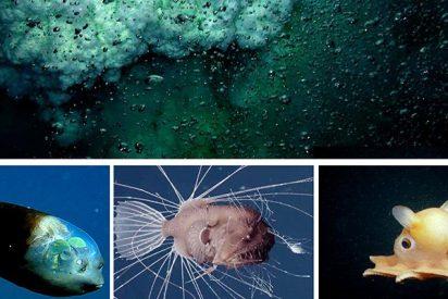 Descubren tres nuevas especies de peces en un abismo del Pacífico