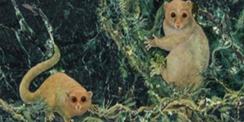 Descubren tres nuevas especies de primates, extintos hace 40 millones de años, que pesaban menos de un kilo