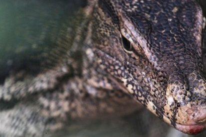 """Este enorme reptil de 45 kg y capaz de """"comerse a un niño"""" atemoriza a una familia en EE.UU."""