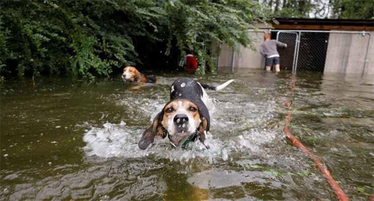 Seis perros fueron rescatados de la muerte tras el paso del huracán Florence (Vídeo)