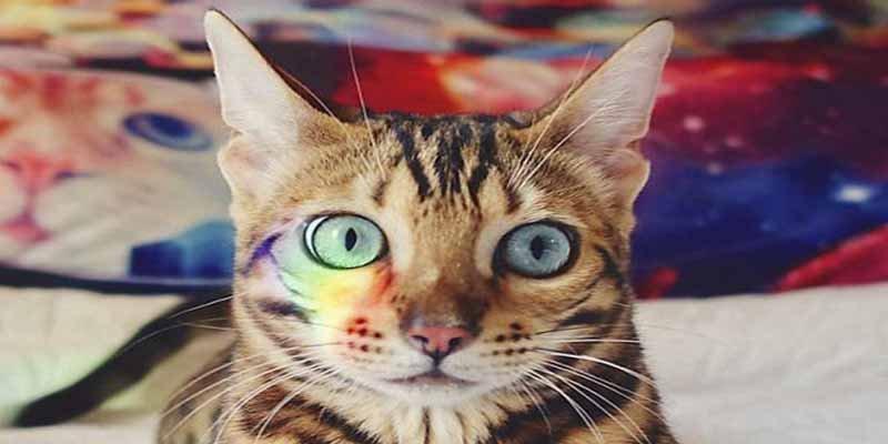 Te presentamos a 'Suki', una gata viajera que lleva una vida bastante mejor que la tuya