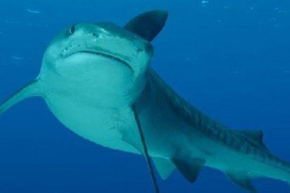 Este gran tiburón aparece en una playa causando el pánico
