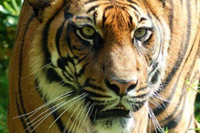 Este animal, uno de los más raros del planeta muere de una manera brutal y absurda