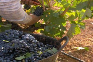 Cómo crear tu propio vino en seis sencillos pasos